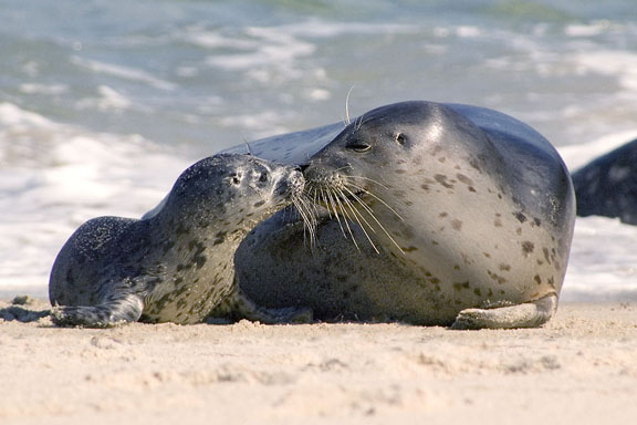 harbor-seals_garry-mccarthy
