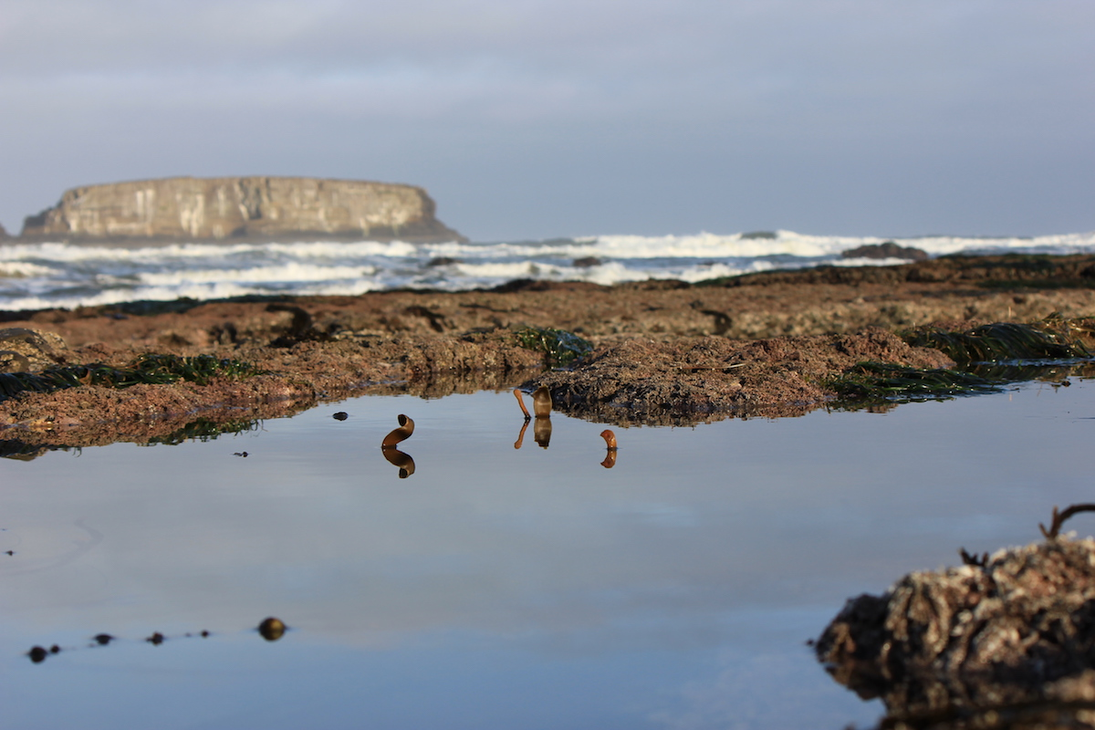 Otter Rock Marine Reserve Guided Tidepool Series!
